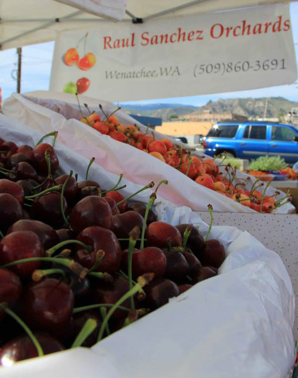 Raul Sanchez Orchards